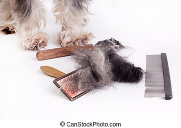 Dog with grooming equipment