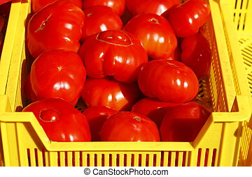 Frische Tomaten in einer gelben Plastikkiste auf einem...
