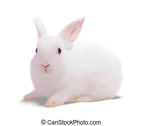 white rabbit - Little white rabbit. Isolated on white...