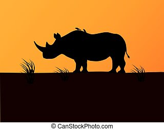 Vector black rhino silhouette background sunset - Vector...
