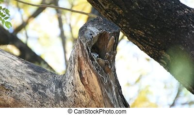 Bird (Spotted owlet, Owl) in hollow tree trunk