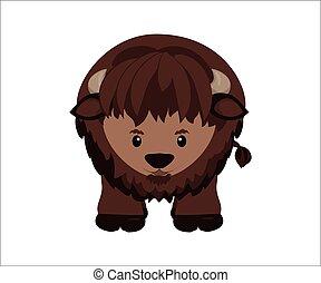 American buffalo, wild bison - American buffalo, north...