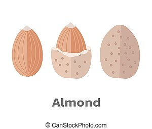 Almond Nuts Vector Illustration in Flat Design - Almond nuts...