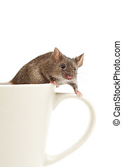 mouse on coffee cup isolated