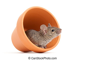 mouse in flower pot isolated on white