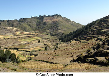Grain harvest and fields in Ethiopia