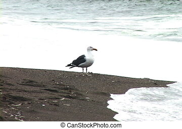 Seagull on beach with waves