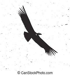 condor, bianco, volare,  silhouette, fondo