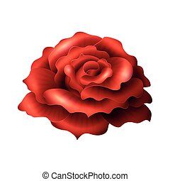 Blooming Red Rose. Realistic glossy vector flower isolated...