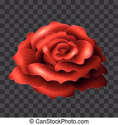 Blooming Red Rose. Realistic glossy vector flower suitable...