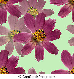 Kosmeya. Seamless pattern texture of pressed dry flowers. -...