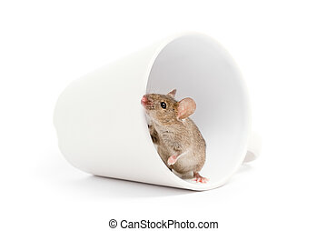 mouse in a cup isolated on white