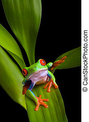 frog on a plant isolated black - frog on leaf of a vibrant...
