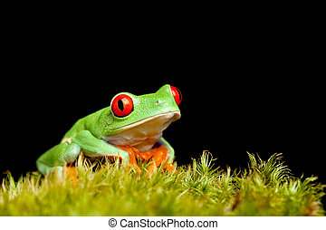 frog on moss isolated black - frog sitting on natural moss...