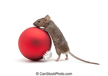 Christmas mouse and bauble isolated - Mouse looking over a...