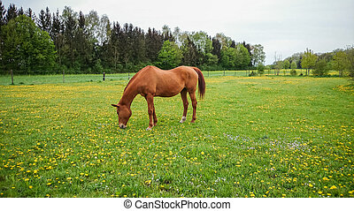 Red brown horse outside on the meadow, soft focus