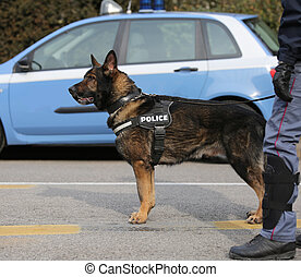 police dog to hunt down drug dealers or to detect explosives...