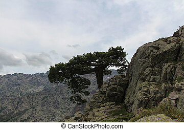 A tree on the mounatin top. - The view of a tree on the...