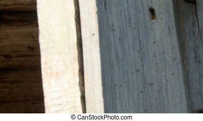 Bee on an apiary in summer day - Bee sitting on a wooden...