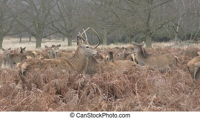 Herd of deer in a field in the forest.