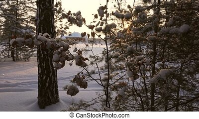 Sun breaks through snow-covered pine branch stock footage...