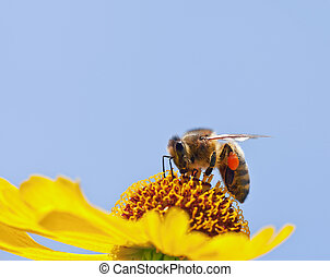 很少, 蜜蜂