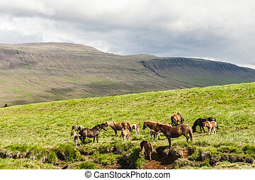 Icelandic horses are rather small and very beautiful. The...