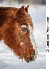 Brown sleeping horse in winter