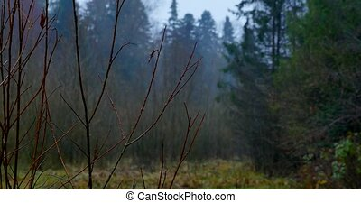 Autumn misty morning in the forest