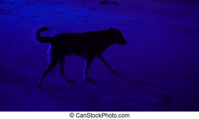 Dog on beach party at night