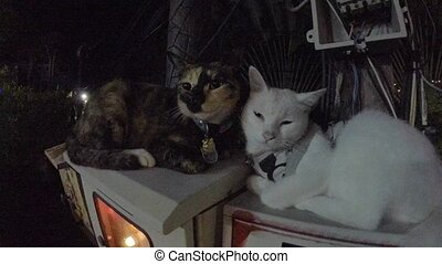 Two lovely cats at night