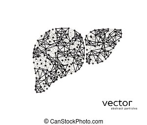 Vector illustration of human liver with cirrhosis. -...