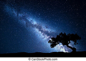 Tree against Milky Way. Night landscape. Night colorful...