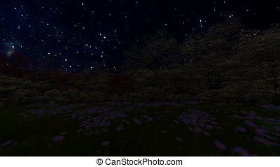 Spring forest, time lapse starry sky