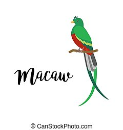 Exotic tropical macaw bird