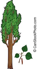 Poplar tree - A poplar tree. Green leves of a poplar.