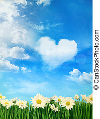 White daisies with puffy clouds in background - White spring...
