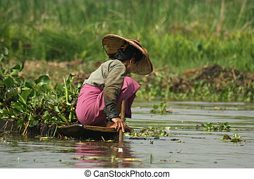 Women Fishing - Myanmar women fishing in Inle Lake.