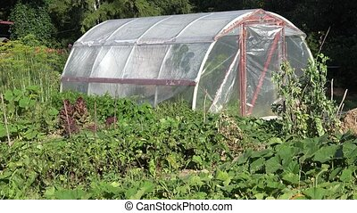 Hothouse and huge pumpkin fruit in rural farm garden....
