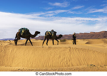 bereber and two camels in the Sahara Desert, Morocco.