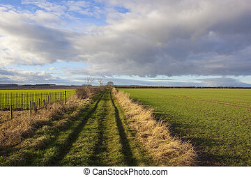 yorkshire wolds bridleway - a yorkshire wolds bridleway in...