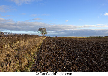 plow soil and hedgerow - a plowed field in a yorkshire wolds...
