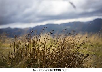 Herbststimmung mit Gräsern und Berpanorama - autumnal mood...