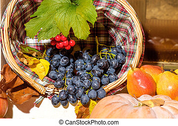 Autumn seasonal fruits harvest - Fresh Grapes, pears and...