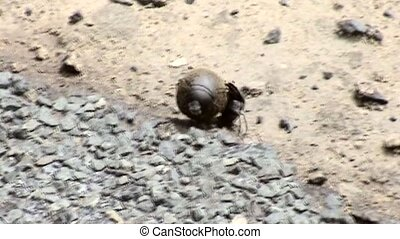 Dung Beetles fertilizer pellet in South Africa - Dung...