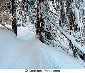 Winter mountain primeval forest - Shadows in winter mountain...