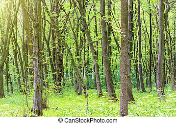 Green forest with trees