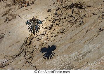 Greater Roadrunner Geococcyx californianus landing on a rock...