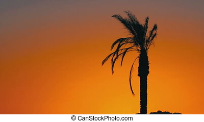 Silhouette of Palm Tree at Sunset - Tropical Palm Tree at...