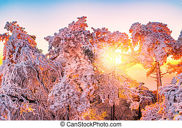 Winter sunrise landscape in Huangshan National park. China.